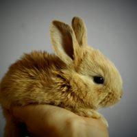 good rabbit